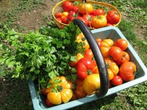 Cuisine economies d 39 energies et mesures d 39 hygiene - Mesure d hygiene en cuisine ...