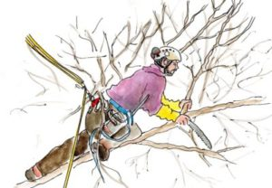 Élagage et taille arbre près de Questembert